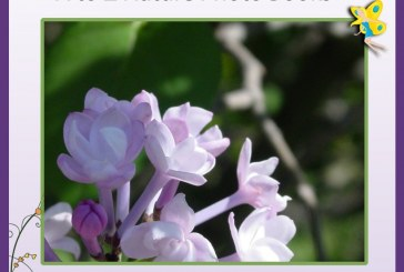 Lilacs A to E